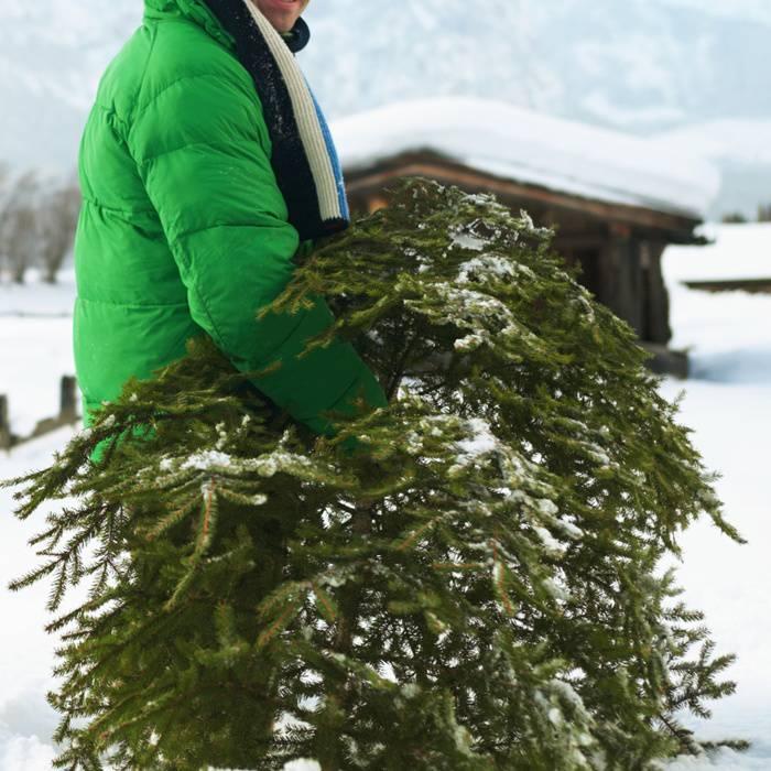 Что делать с елкой во Вроцлаве после праздников