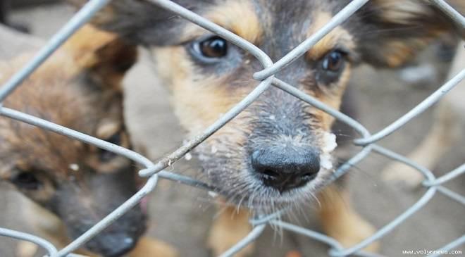 Жахливі умови для тварин в Нижній Сілезії