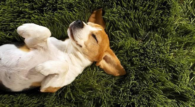 Пікнік на День Собаки у Вроцлаві
