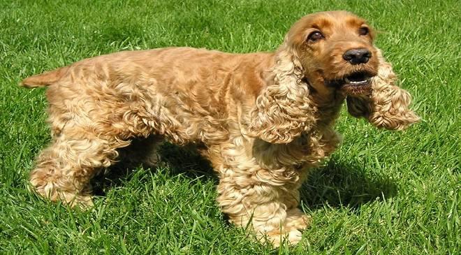 В Болеславці врятували собак, над якими знущався власник