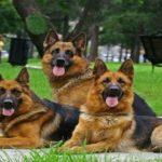 Від вересня у вроцлавських школах з'являться пси