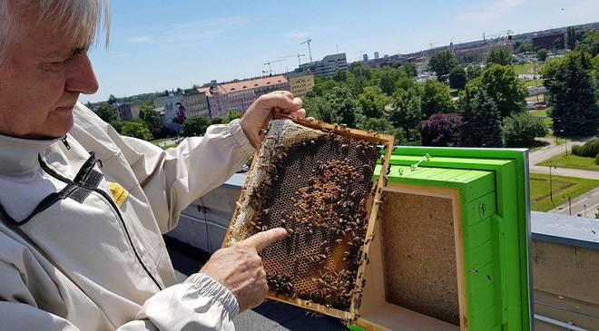 З пасіки на даху нижньосілезького уженду зібрали перший мед