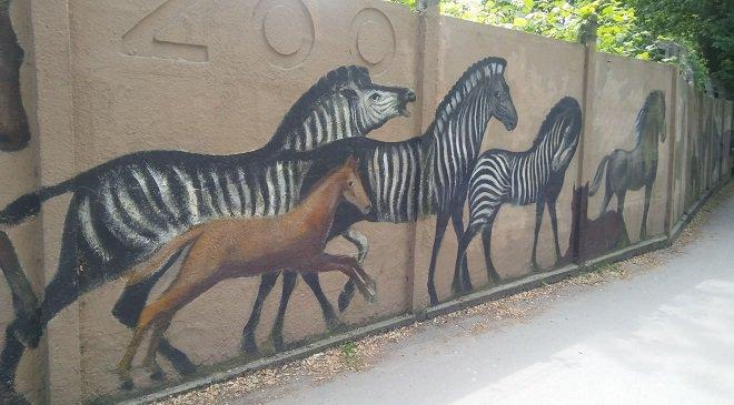У вроцлавському зоопарку прикрасять огорожу