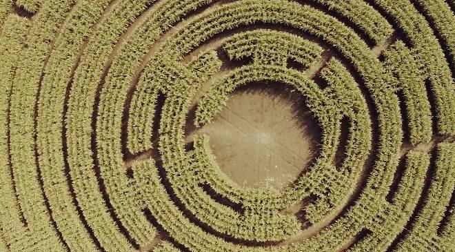 У Нижній Сілезії створили лабіринт з кукурудзи (+ФОТО)