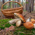 Куди можна піти по гриби у Нижній Сілезії?