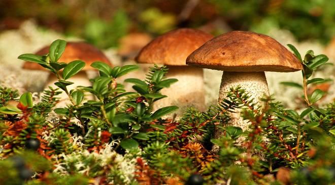 Вроцлав'янка пішла до лісу по гриби і згубилась
