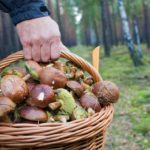 В Болеславці пара пішла по гриби і загубилася в лісі