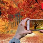 Візьми участь у вроцлавському фотоконкурсі з нагоди Дня Дерева