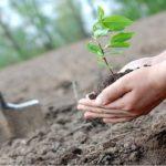 На вихідних у Вроцлаві кожен зможе посадити дерево