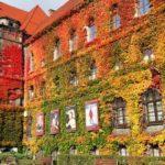 Выходные во Вроцлаве: обзор мероприятий 10-12 ноября