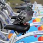 Система прокату міських велосипедів у Вроцлаві діятиме до четверга