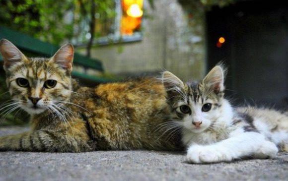 Нові аспекти програми захисту тварин у Вроцлаві