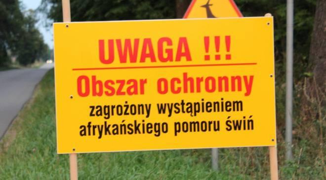 У Нижній Сілезії  виявлено збудник африканської чуми свиней