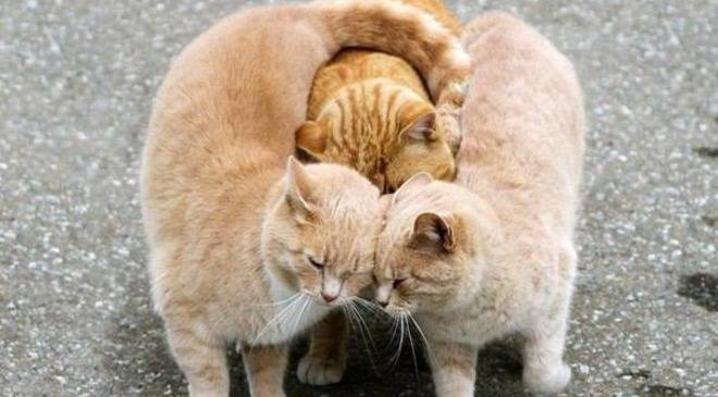 Організація захисників тварин у Вроцлаві організовує притулки для тварин