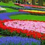 До кінця 2018 року у Вроцлаві буде посаджено 250 тисяч нових квітів