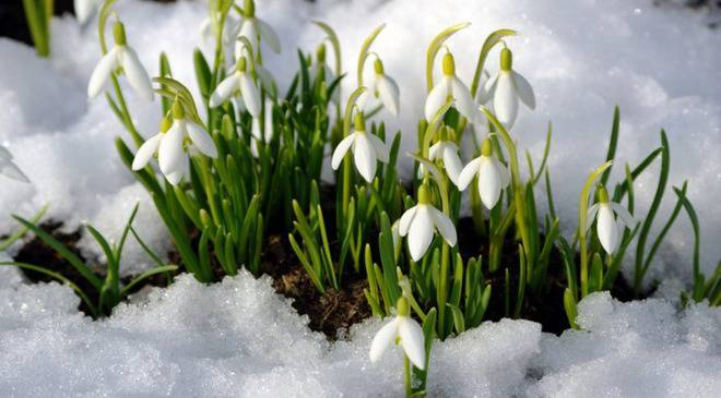 Коли, нарешті прийде потепління до Вроцлава?