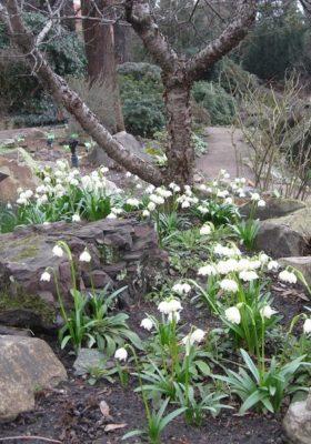 Ботанический сад открывается после зимы