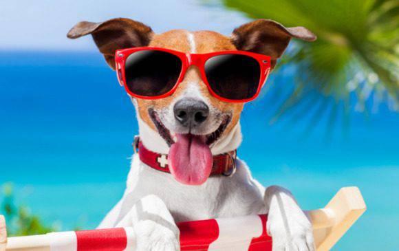 Сонце та спека під кінець тижня – якою буде погода у Вроцлаві в найближчі дні