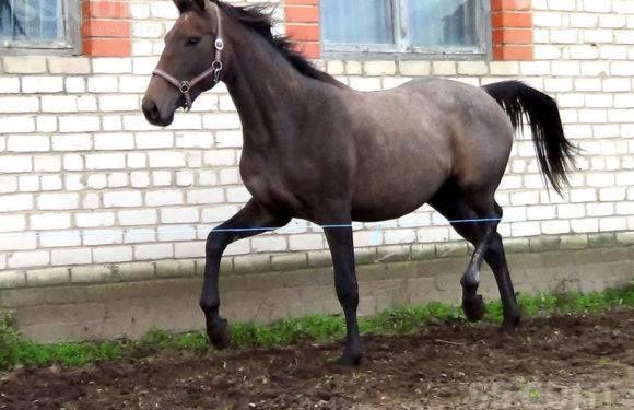 Нижня Сілезія: кінь напав на 10-річну дитину