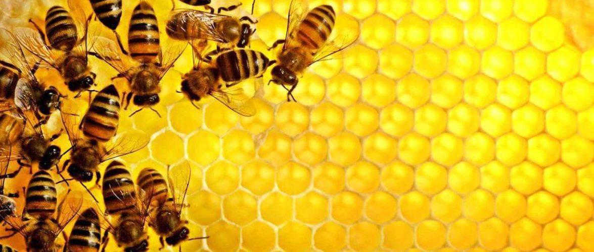 """300 000 бджіл на даху у """"Вроцлавії"""""""