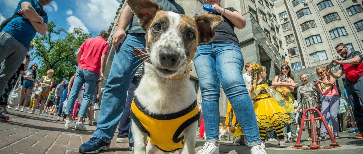 Безкоштовна реєстрація собак у Вроцлаві