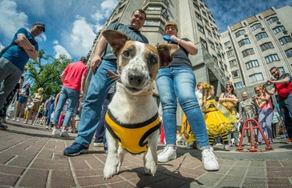Наближається Перший Парад Вроцлавських собак