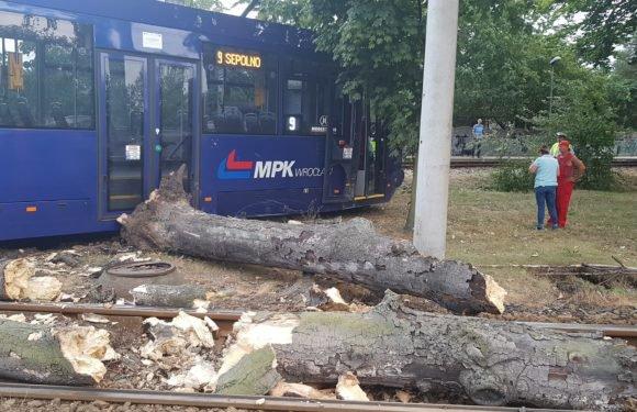 Во Вроцлаве дерево упало прямо на трамвай (+ФОТО, +ВИДЕО)