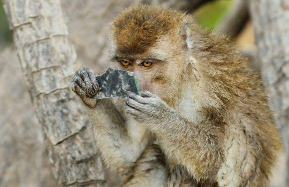 Мавпа у Вроцлавському зоопарку вкусила дитину?