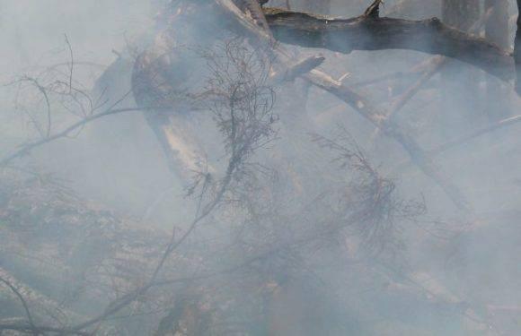 Гігантська пожежа на військовому полігоні в Нижній Сілезії