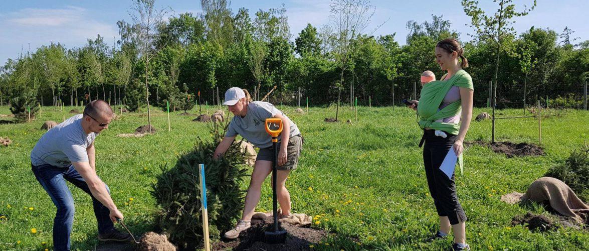 У Вроцлаві розпочалася екологічна акція з посадки дерев