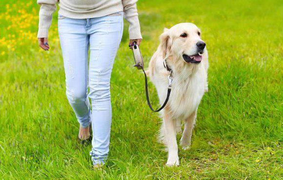 Нові штрафи за вигул собак в Польщі: чи будуть дотримуватися правил власники домашніх тварин?