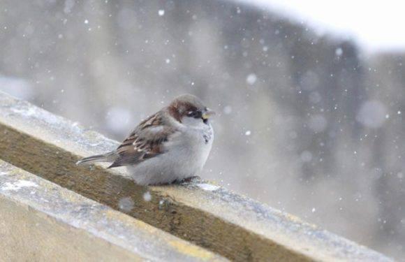 Смерть від переохолодження: в Польщі лише за один день від холоду загинули 6 осіб
