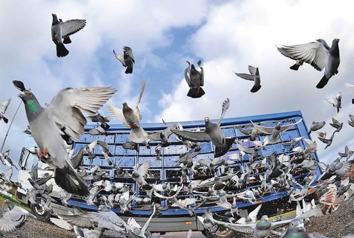 Нижня Сілезія: міста і проблемні птахи…