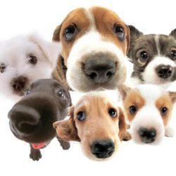 Услуги по уходу за собаками