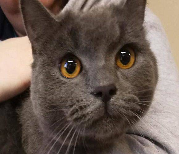 Приклад милосердя: президент Вроцлава взяв до себе кота, залишеного на вокзалі