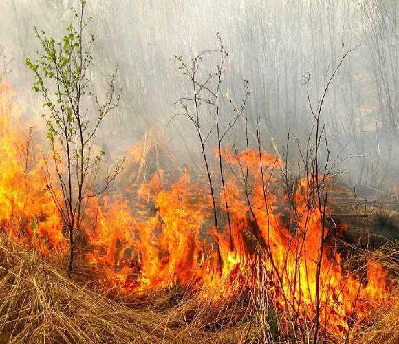В Нижній Сілезії масово спалюють суху траву