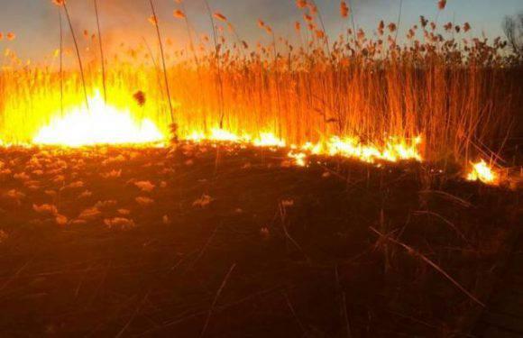 Польща: підпал сухої трави став причиною смерті чоловіка
