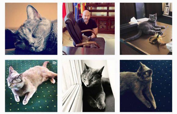 Вроцек —  кіт покинутий на автовокзалі Вроцлава став зіркою Instagram