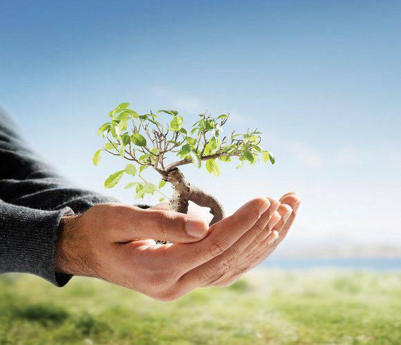 У центрі Вроцлава посадили дерева