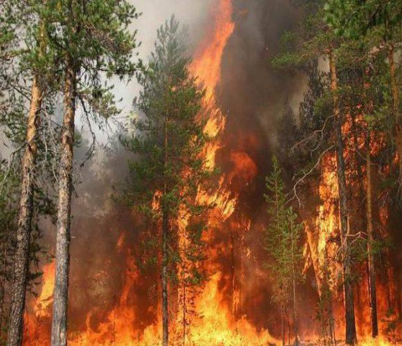У Великодню Суботу в Польщі загасили понад 1500 пожеж