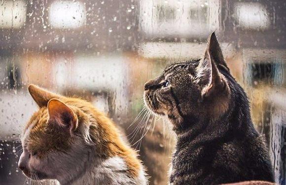 Тепла не буде: на Вроцлав чекають дощі