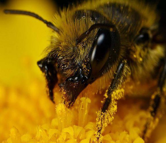 Бджоли оскаженіли: в Нижній Сілезії комахи заатакували туристів