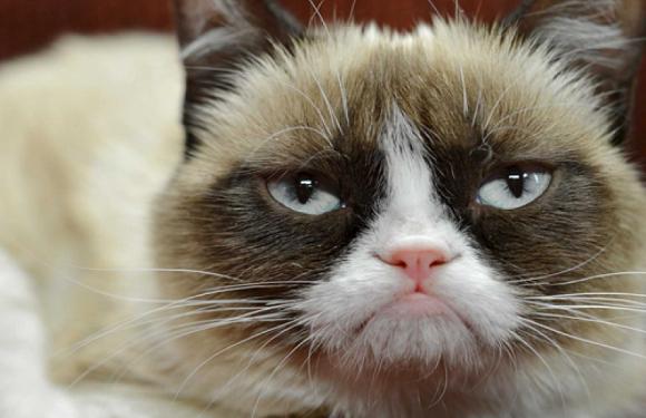 У Вроцлаві відтепер можна безкоштовно простерилізувати котів та собак: дізнайся адреси клінік!
