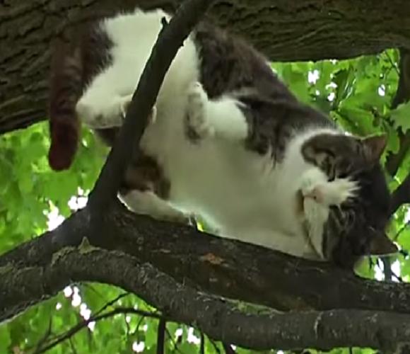 Дивина! В Польщі вже 6 років на дереві живе кіт, і спускатися вниз не збирається [ВІДЕО]