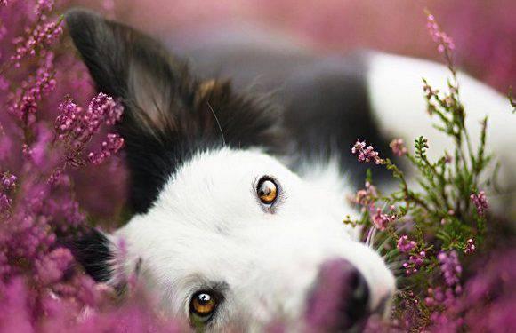 Польська фотографка дивує знімками тварин: дивіться самі! [+ФОТО]