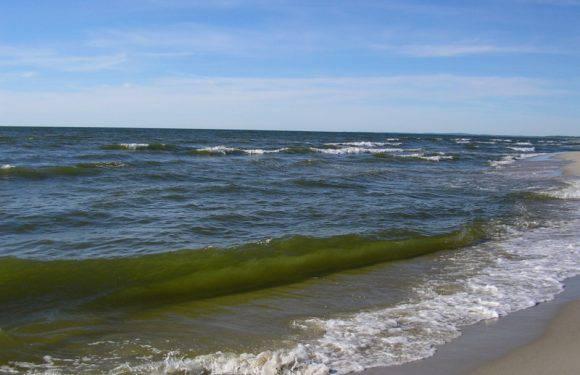 Знову небезпечні ціанобактерії на Балтиці. Санітарна інспекція застерігає від купання
