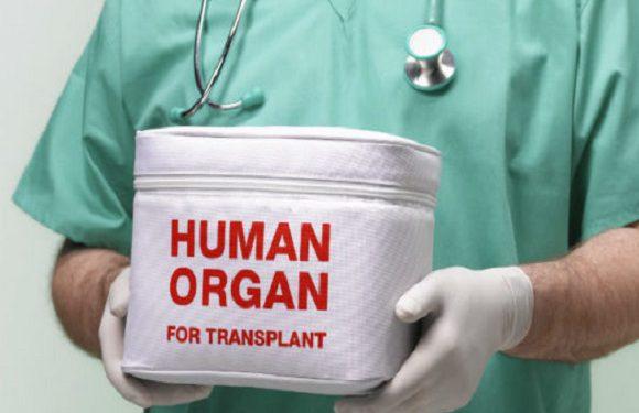 У Вроцлавському шпиталі відтепер будуть робити пересадку печінки