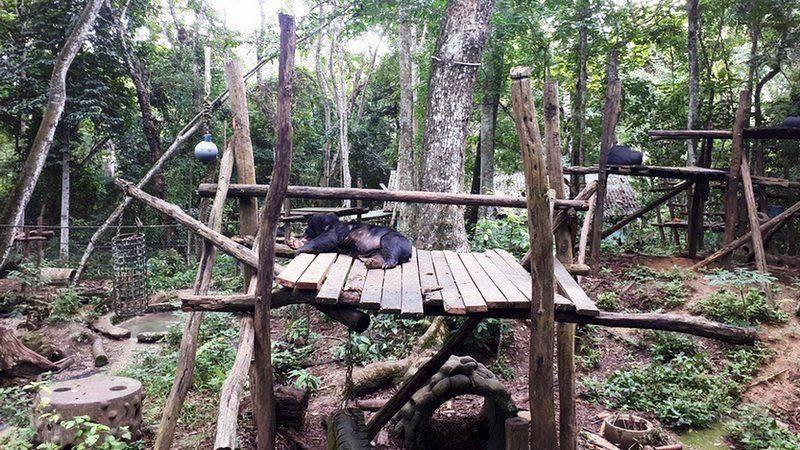 Disney Conservation Fund та ZOO Вроцлав реалізують  проект порятунку тварин у Лаосі