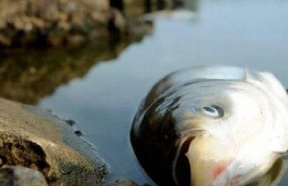 На Легницькому озері виявили понад 2 тонни мертвої риби