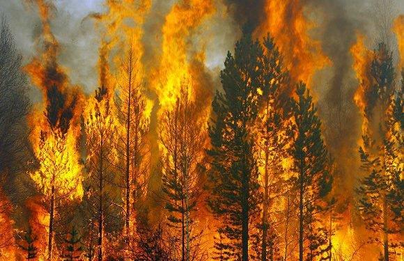 Від початку року у Польщі вибухнуло 9 тисяч пожеж